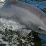 Watch dolphins swim around Charleston Harbor